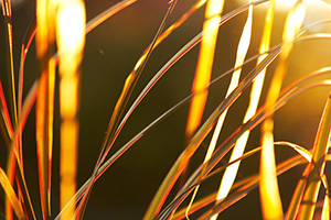 golden-hour-photos-300